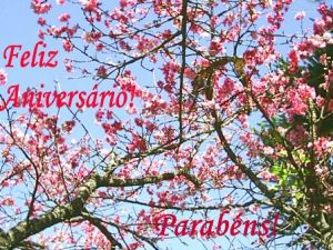 parabéns_cerejeira