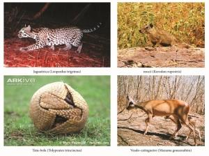 caatinga-fauna