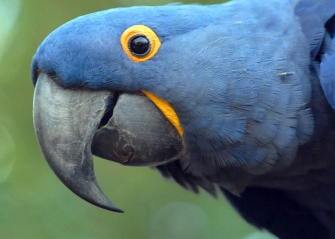 Dia Mundial da Biodiversidade e a proteção da fauna brasileira