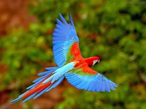 Fauna Brasileira 4
