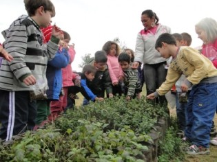 criancas-horta